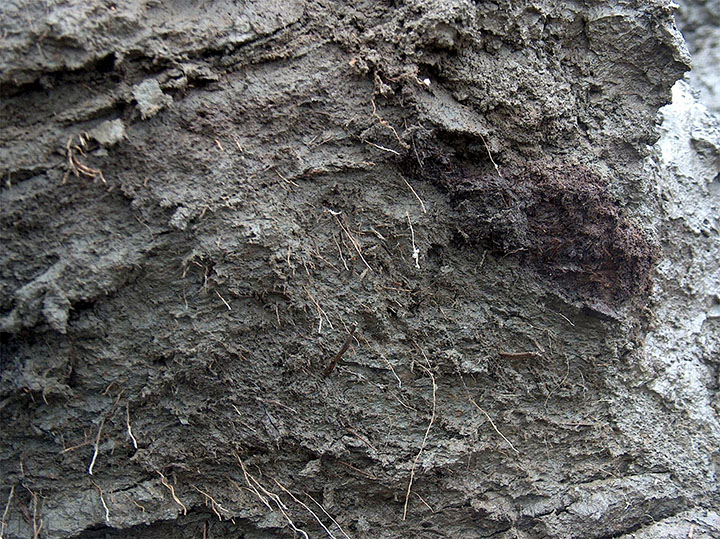Worms frozen in permafrost for 42,000 years come back to life