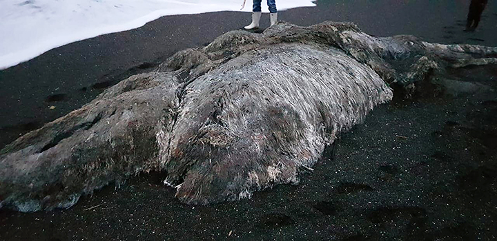 Kamchatka sea monster