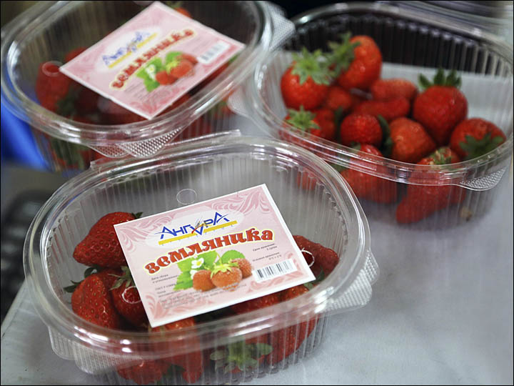 Strawberry in Irkutsk region