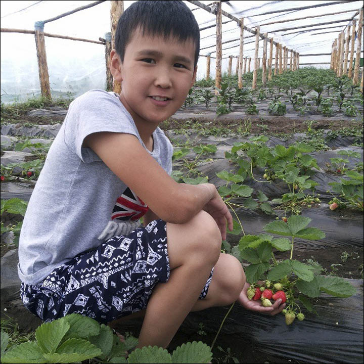 Strawberry in Yakutia