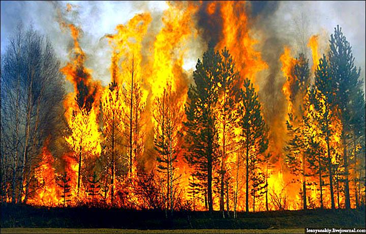 wildfires Trans Baikal