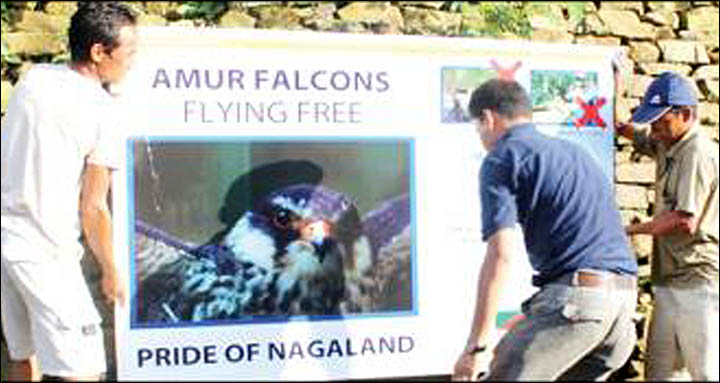 Campaign against Amur falcon slaughter in India