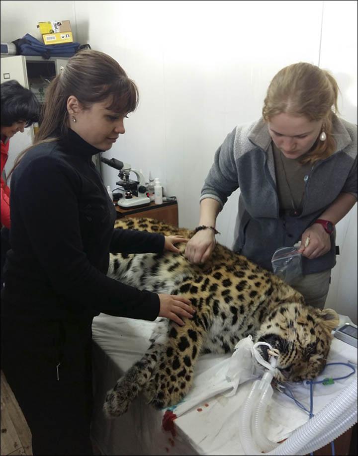 Ekaterina Blidchenko examines Leo 80M