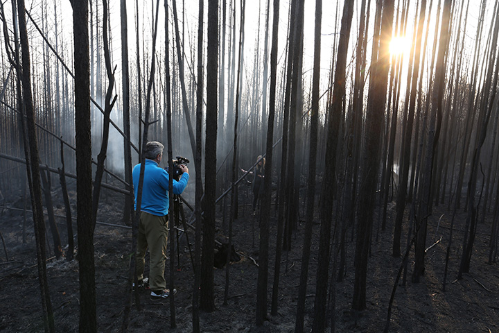 Burned down forest