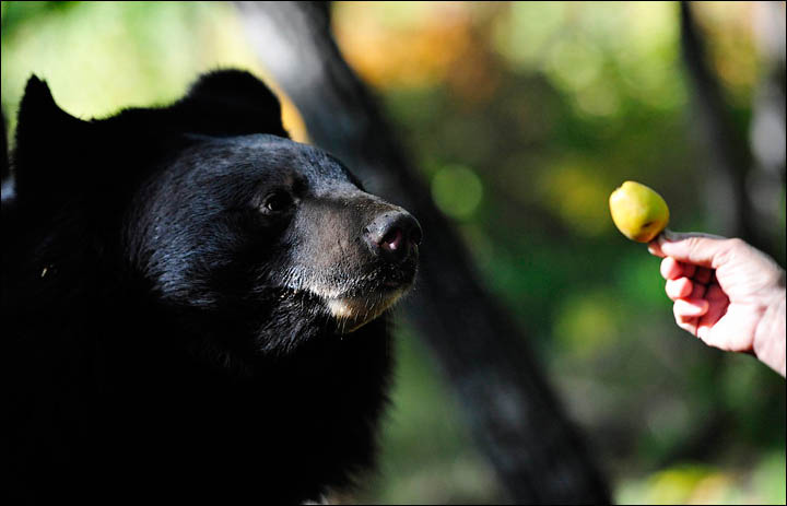 Black bears need help