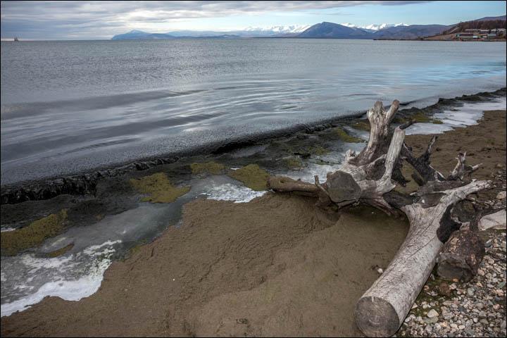 inside_algae_on_the_shore.jpg