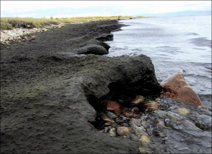inside_algae_on_the_shore_new.jpg