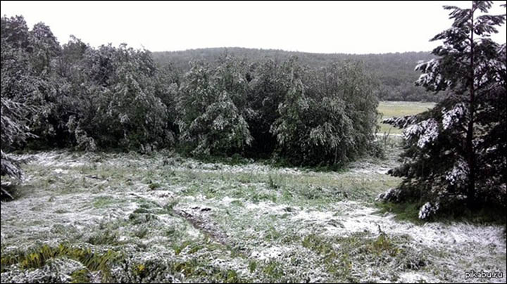 Snow on trees in Chelyabinsk region