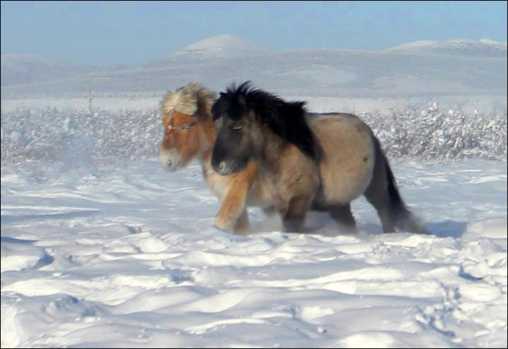 Amazing pictures of Dekabrina, born in minus 62C in the coldest village in the world.