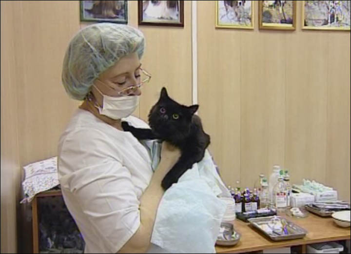 Black cat with veterinarian in clinic