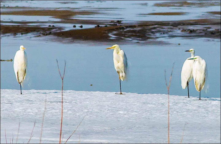 Siberian birds