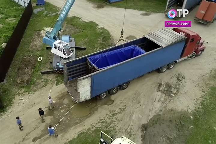 Beluga whale loaded into the truck