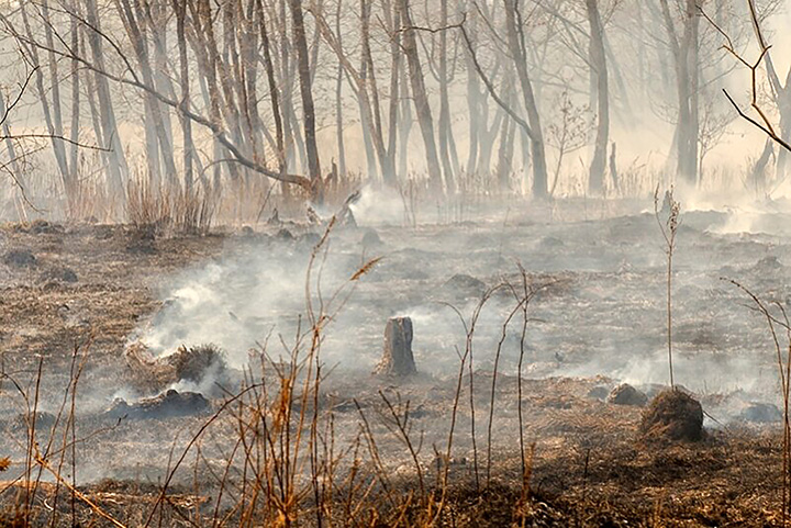 2019 to be 'worst-ever year' for wildfires in Siberia and 'only rain can now extinguish flames'