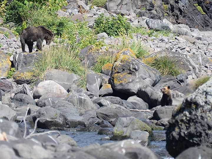 Mother-bear with two cubs spotted next to the tragedy site