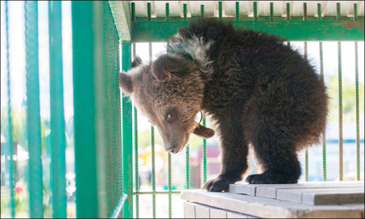 Bear cub in zoo