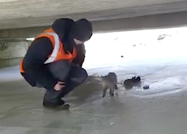 Abandoned cat rescued after being left to die on frozen river