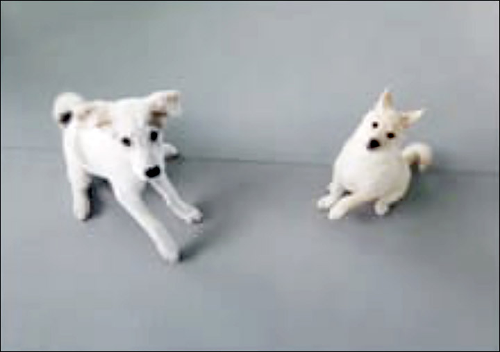 Barking mad or the way to the future as cloned Laika dogs come home to Yakutia?