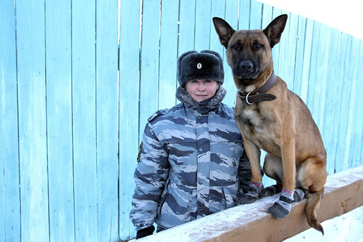 Two cloned dogs start work guarding prisoners at Forced Labour Camp #1 in YakutskqTwo cloned dogs start work guarding prisoners at Forced Labour Camp #1 in Yakutsk