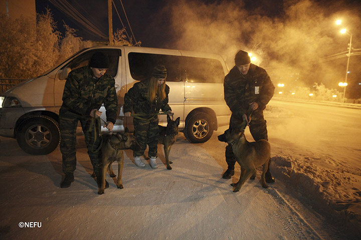 Two cloned dogs start work guarding prisoners at Forced Labour Camp #1 in Yakutsk