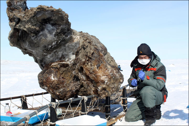 South Korean specialist hails opening of new World Mammoth Centre in Siberia, dedicated to bringing beast back to life.