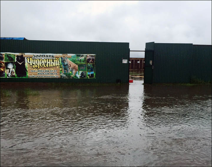 Flooded zoo