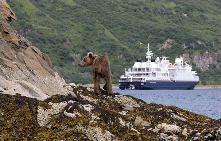 Silver Discoverer near Alaska with bear cube