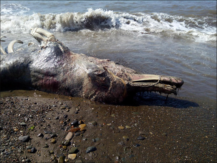 Does this strange sea creature washed up on shore have ...
