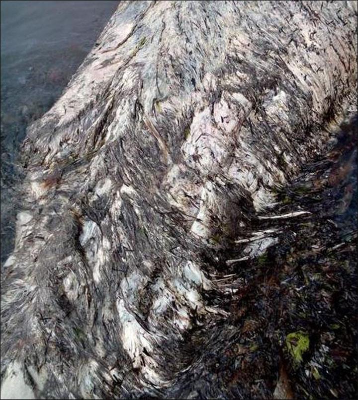Monstruo marino ' Inside_hairy_back