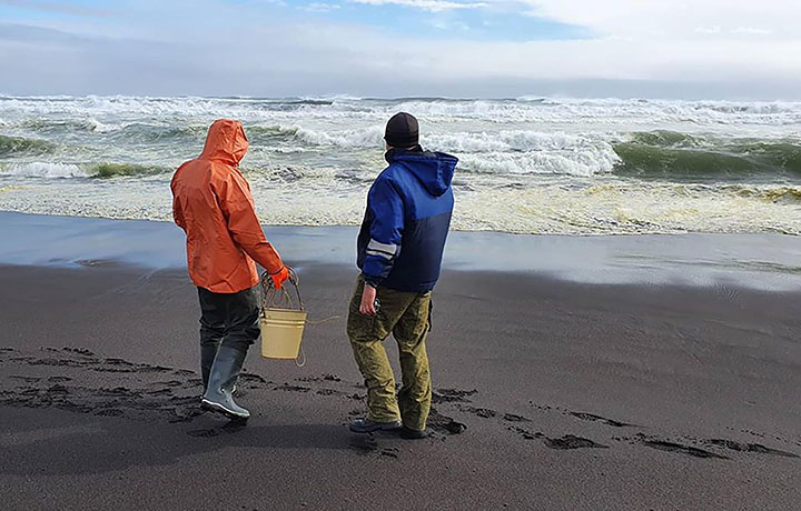 Eco disaster at Kamchatka peninsula with mass death of sea animals at precious Pacific beach