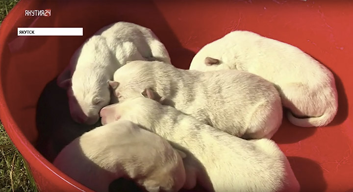 First puppies born in May 2019