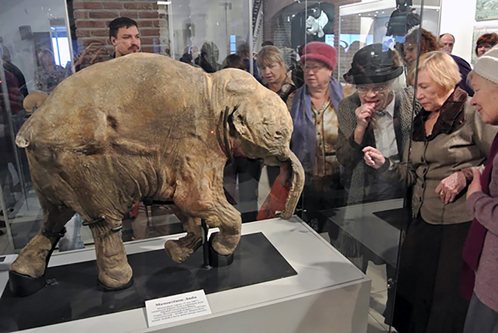 This is the only mammoth on Earth  so well preserved - with just the tail and an ears missing.