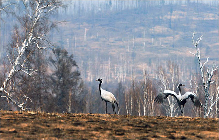 Forest infernos will be extinguished by the weekend, pledges government, as wildfires become political issue in Moscow.