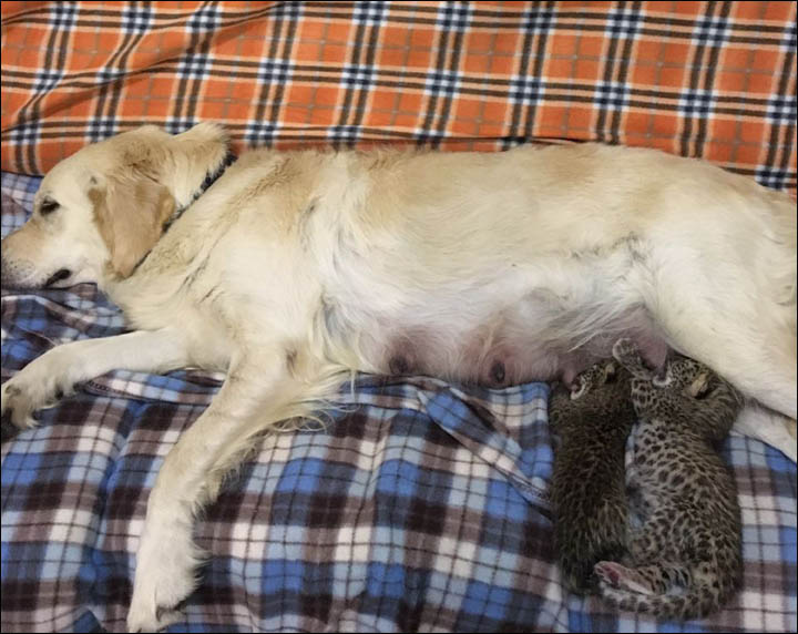 Mother-dog and kittens