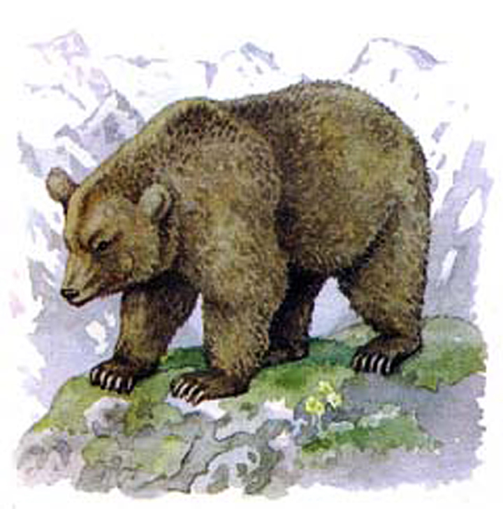 Picture of the bear