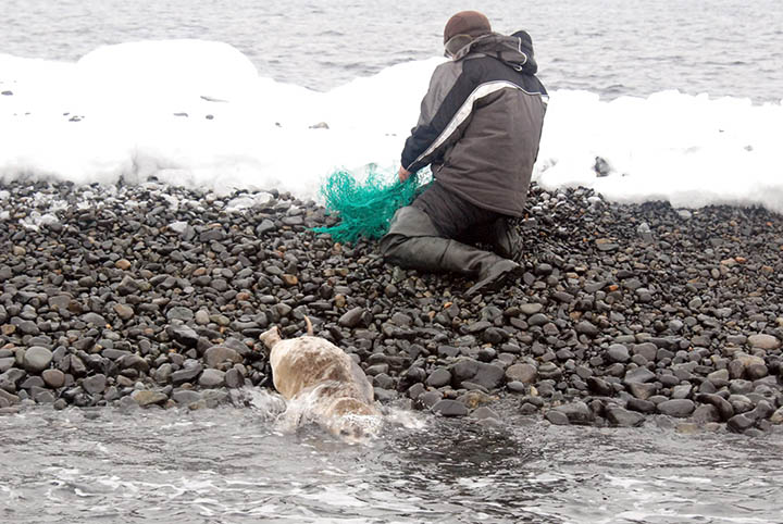 Fishing nets junked by North Korean poachers in Russian waters kill marine life