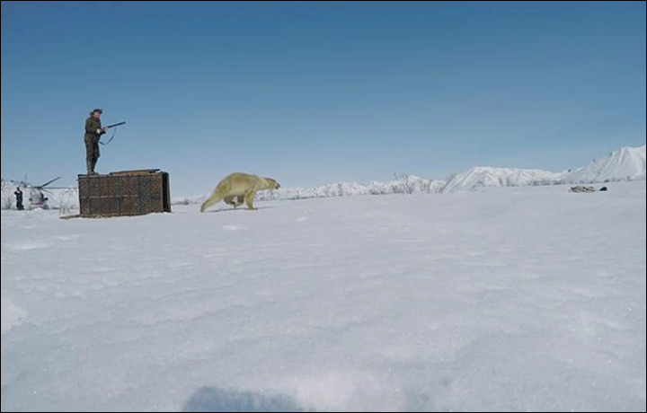 Polar bear released in Chukotka