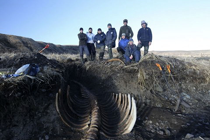 Ancient sea monster reappears on remote Russian island