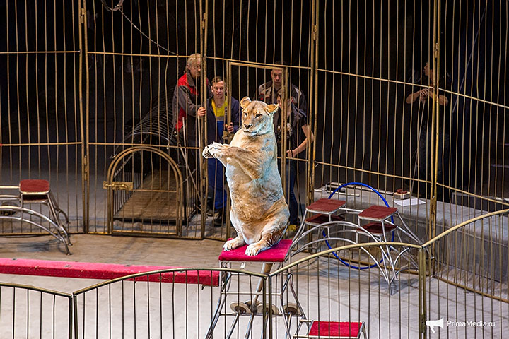 Shock over 'fat cats' on parade at newly reopened Vladivostok Circus