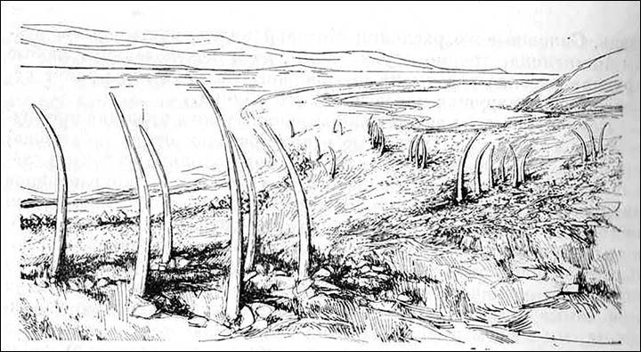 Drawing of Whale bone alley