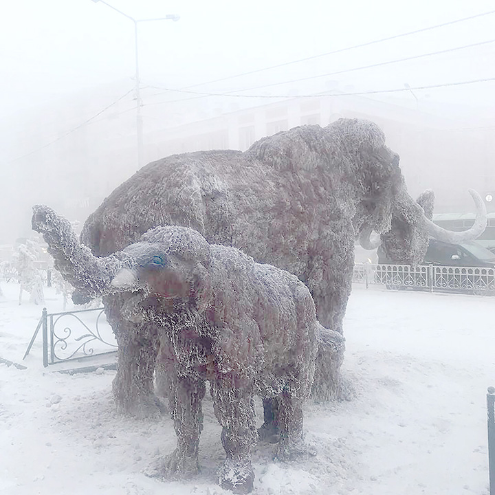 'We're back' - woolly mammoths reappear in Siberia