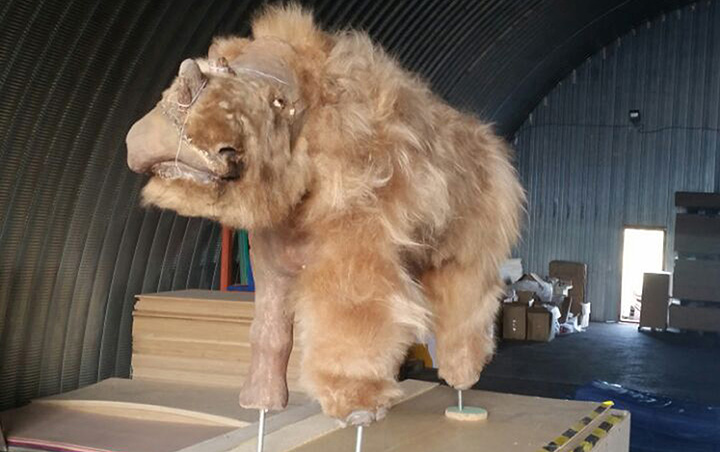 A well-preserved woolly rhino with its last meal still intact found in the extreme north of Yakutia