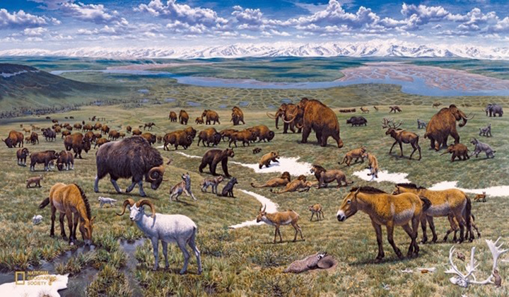 Yak calf born in Pleistocene Park: will a hybrid elephant-mammoth be next?