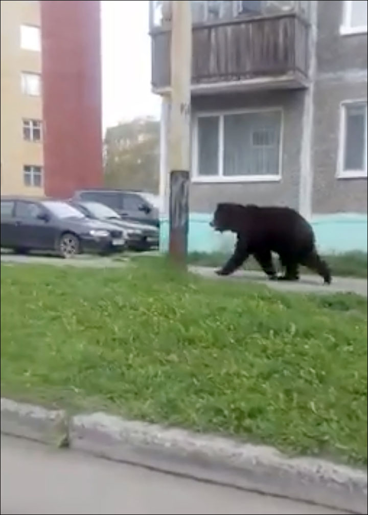 Bear causes panic by invading closed nuclear submarine port of Vilyuchinsk
