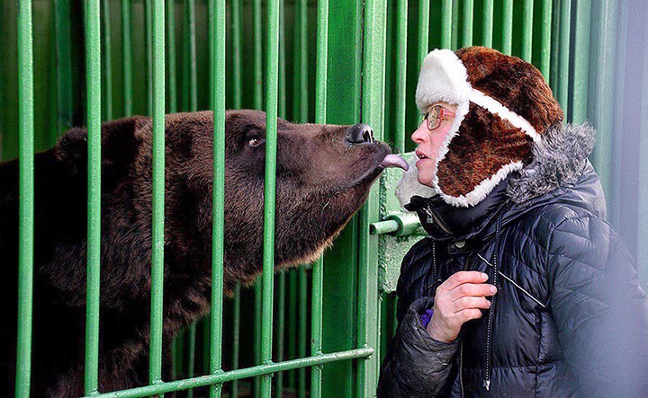 Brown bear attacked a zoo keeper in the Far East of Russia