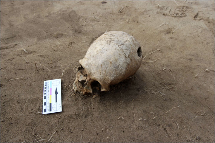 Scull in situ