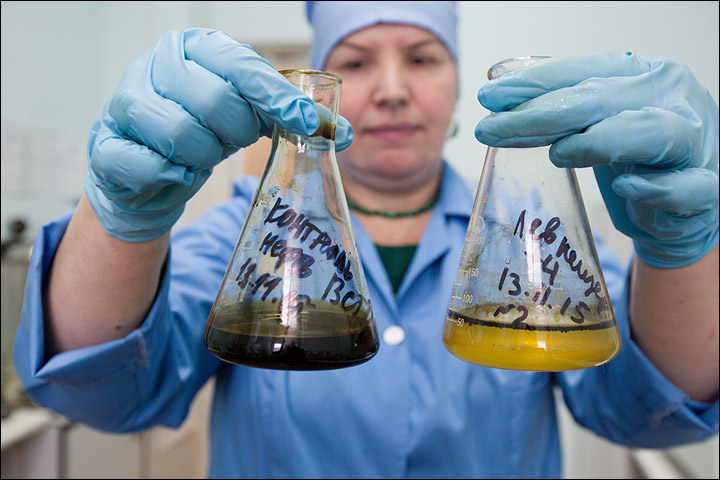 Bacteria destroys oil