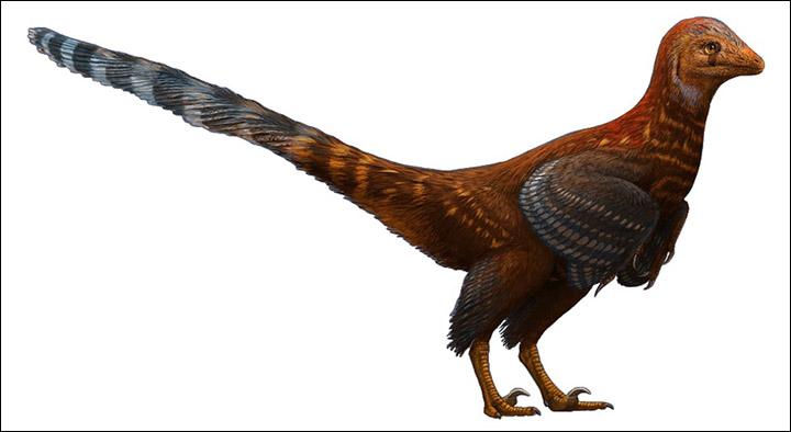 Troodontid