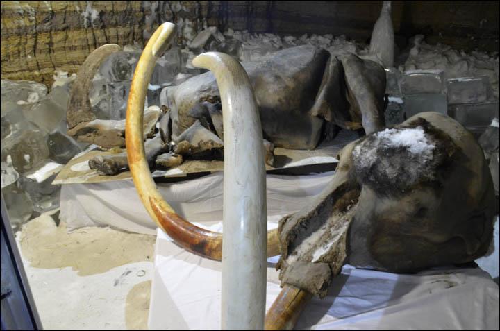 Yukagir mammoth