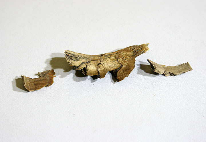 Ivory chips left by ancient hunters
