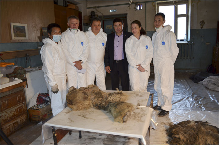 Woolly rhino Sasha research team